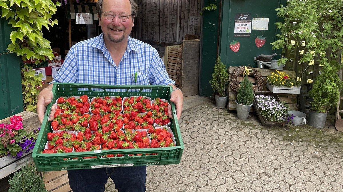 Obsthof Otte öffnet Erdbeerfelder für Selbstpflücker   nw.de