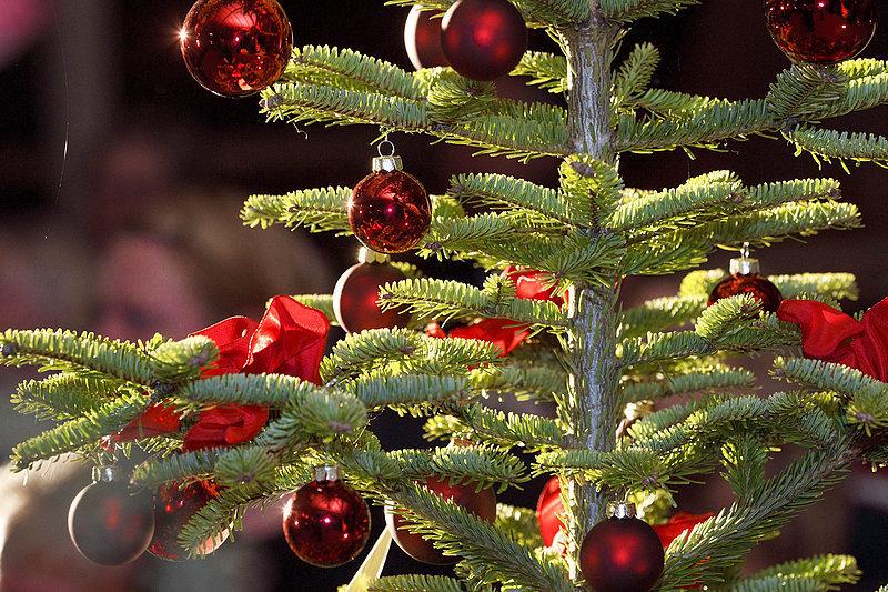 weihnachtsbaum kostenlos entsorgen neue westf lische mitte. Black Bedroom Furniture Sets. Home Design Ideas
