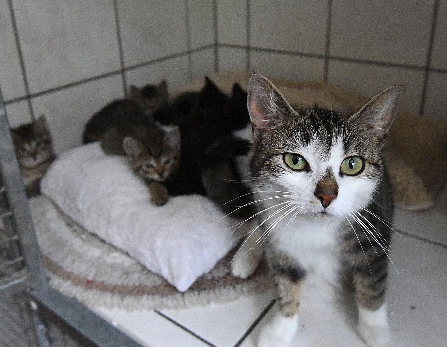 paderborn viele katzen warten im tierheim auf ein neues zuhause. Black Bedroom Furniture Sets. Home Design Ideas